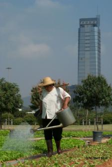 Agricultural worker in the Pearl River Delta, 2002